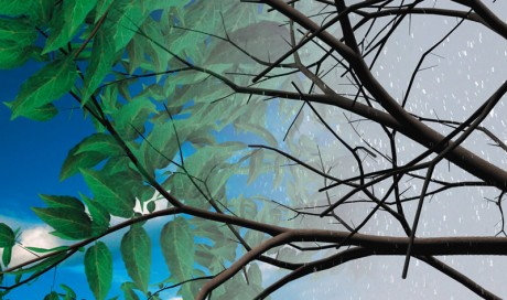 Le foglie di un Albero